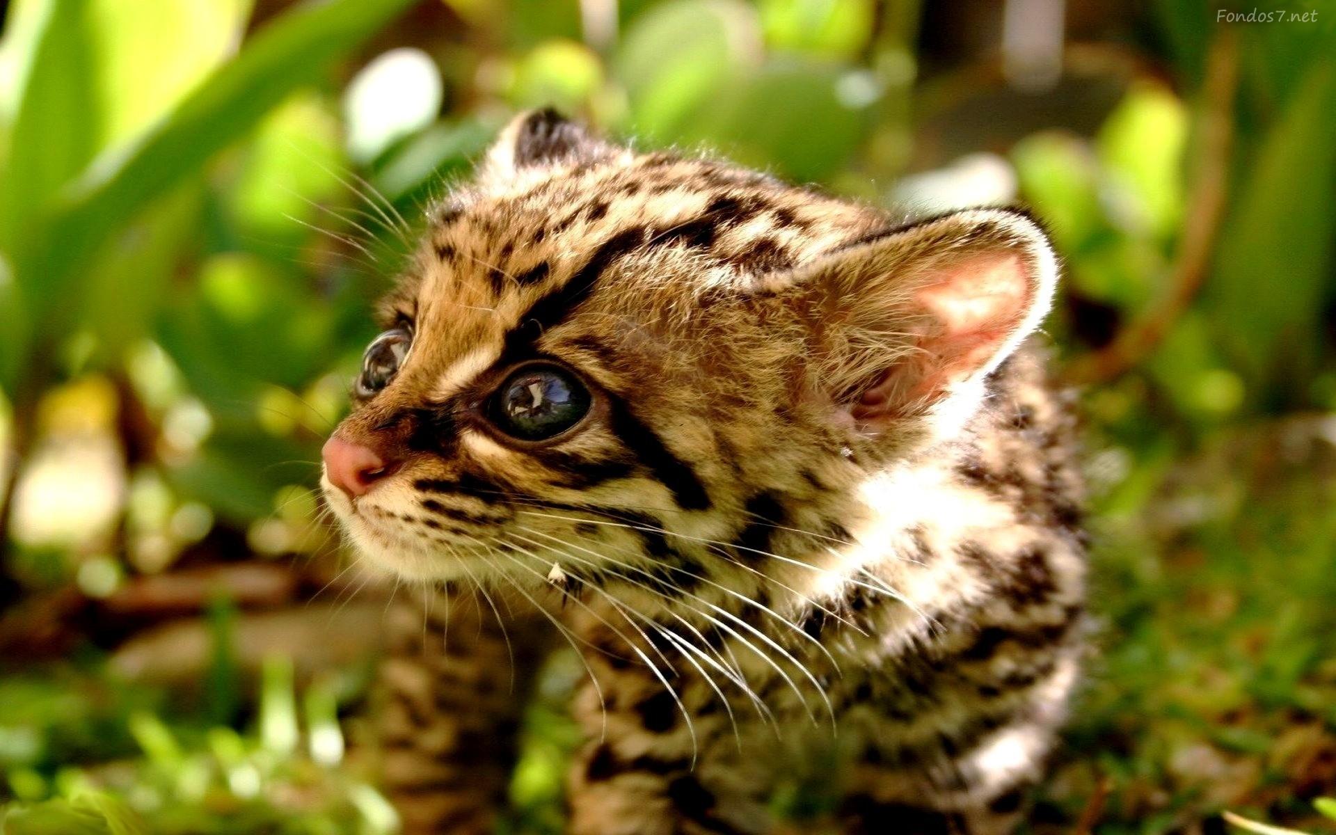 gato-salvaje-bebe-7599