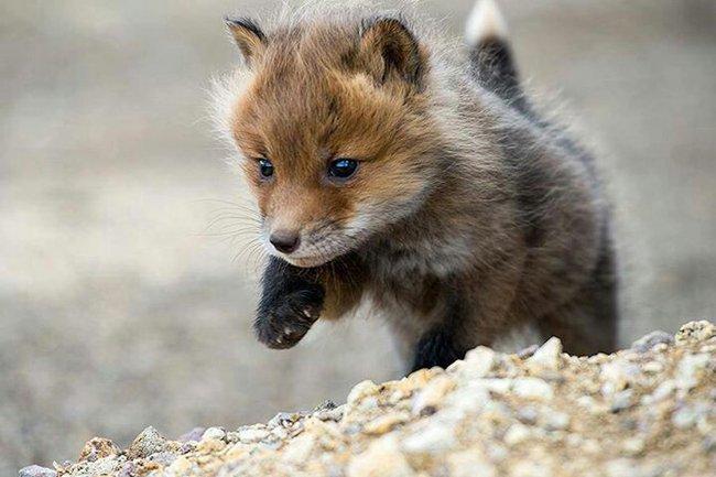 bebé-zorro