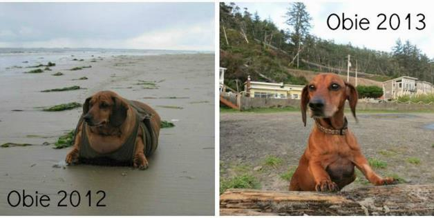 Obie-the-Obese-Dachshund-Has-Lost-50-Lbs-22-67-Kg-Is-Now-Healthy-and-H