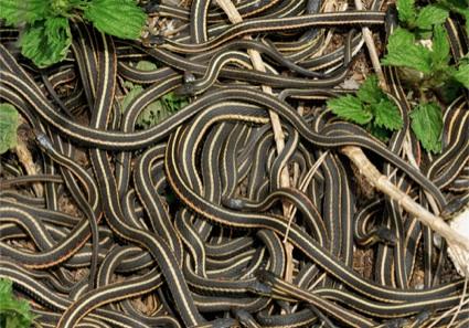 isla-serpientes