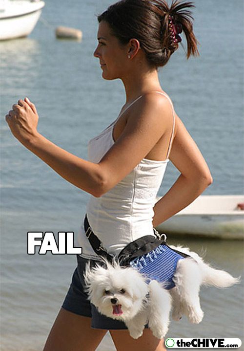 pet-dog-fail-funny-animal-22