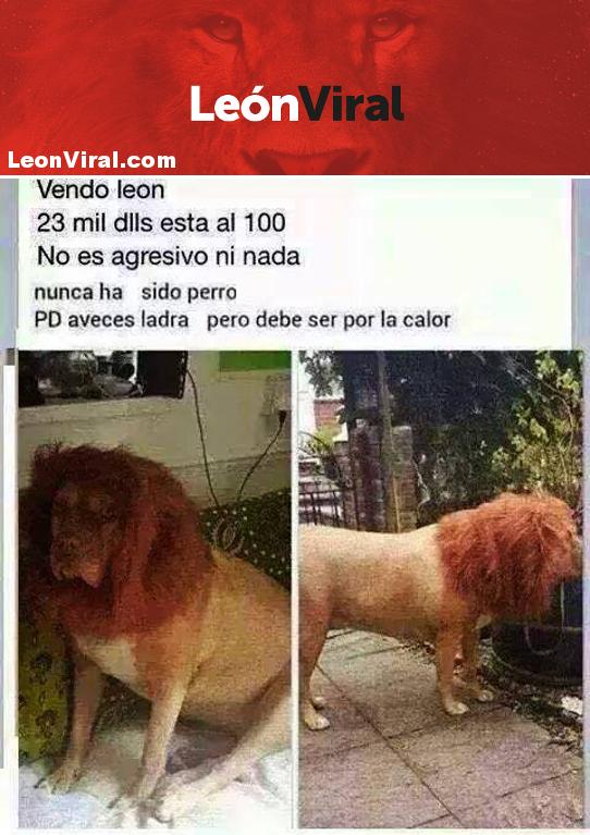 vendo-leon