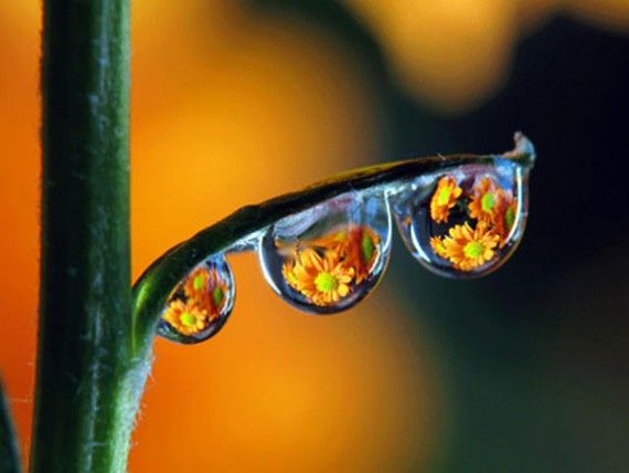 Amazing-Shots-by-Brilliant-Photographer-10-570x428