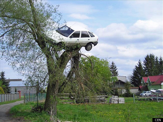 CAR-IN-TREE