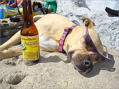 funny-dog-picture-drunk-at-beach