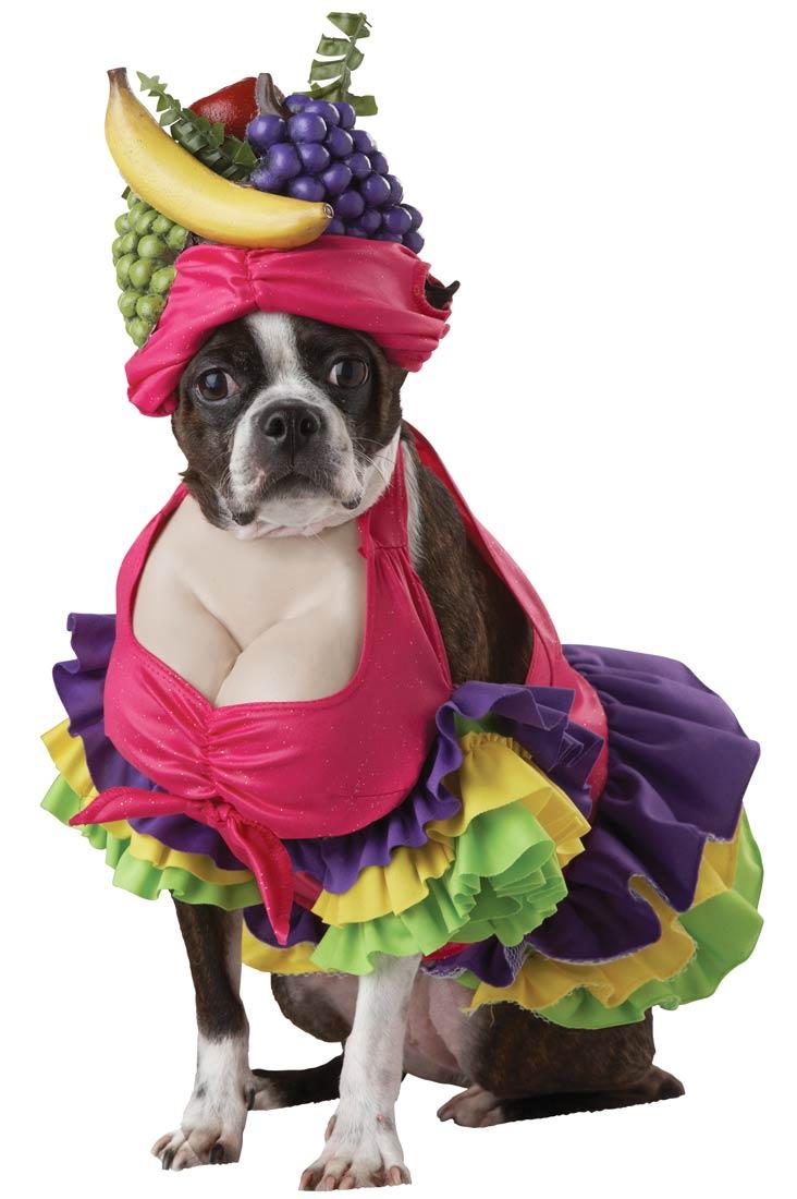 Cha-Cha-Cha-Dog-Costume