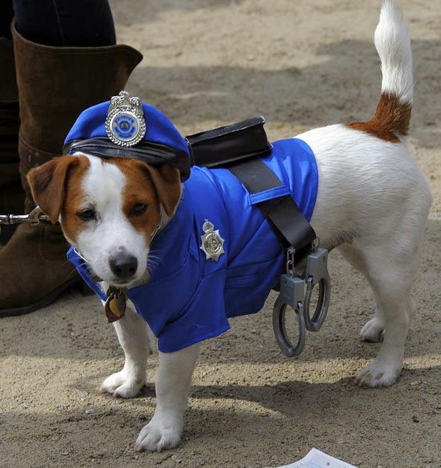 disfraz para perro policia, disfraz policia perro, perro policia 2