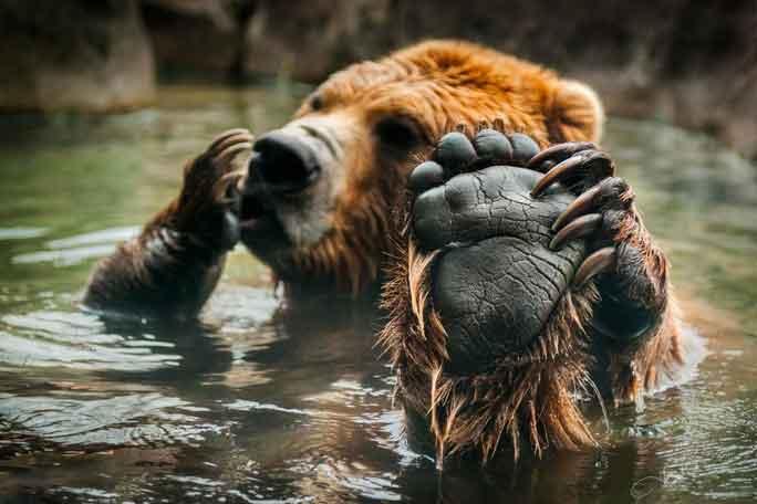 relax-bear