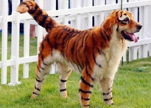 Cool-Strange-Pets