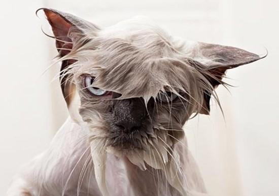 gato-mojado-1